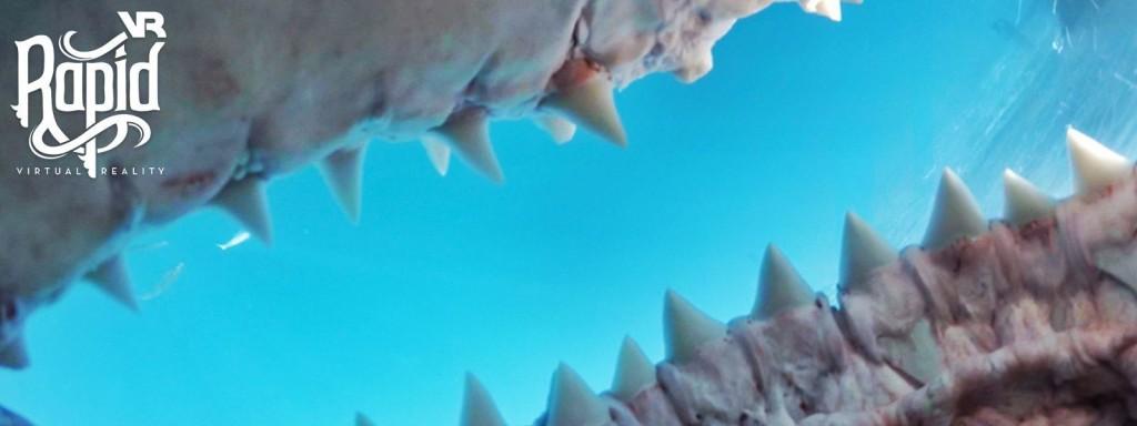 rapid vr samsung shark dive