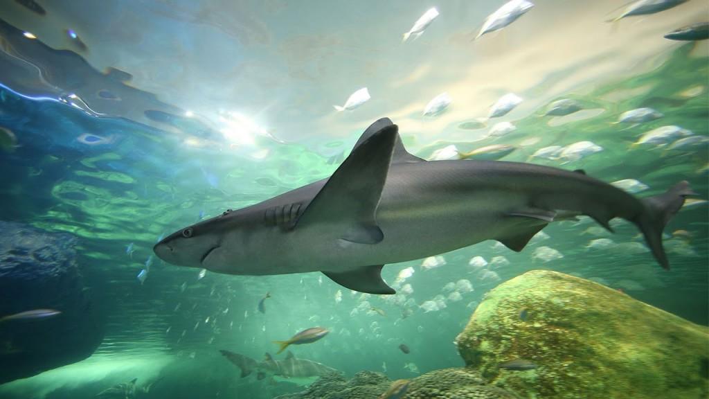 Ripley's Aquarium Dangerous Lagoon