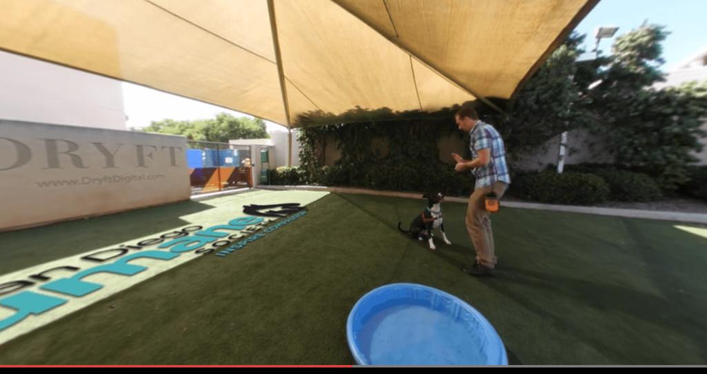 Virtual Pets Dogs