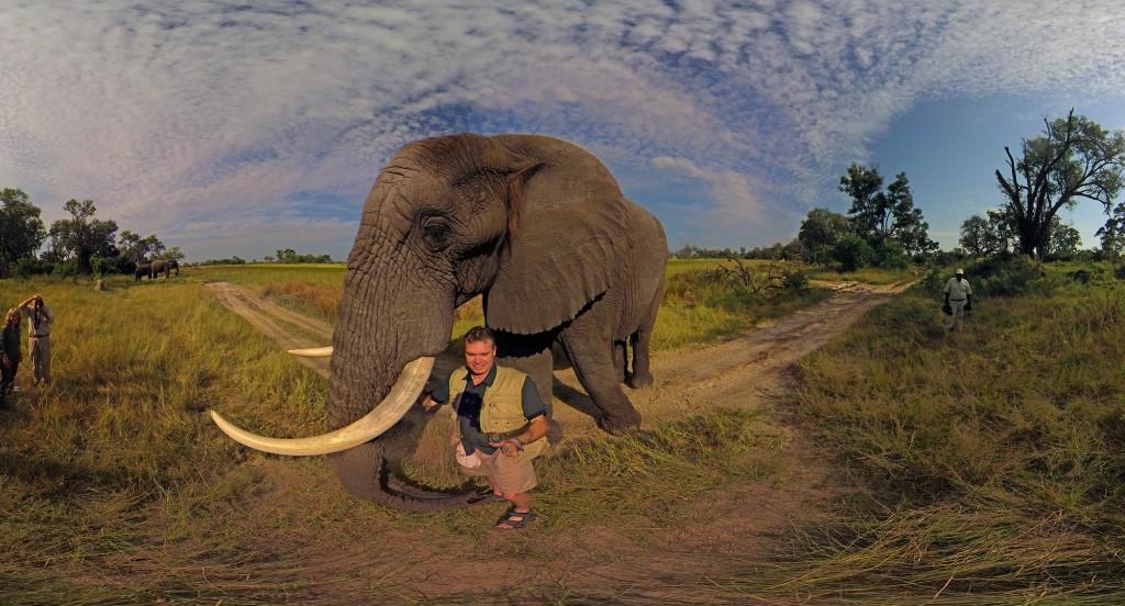 Elephant Experience in Botswana